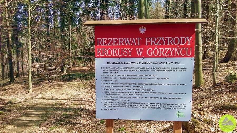 Rezerwat Krokusy wGórzyńcu - tablica informacyjna rezerwatu