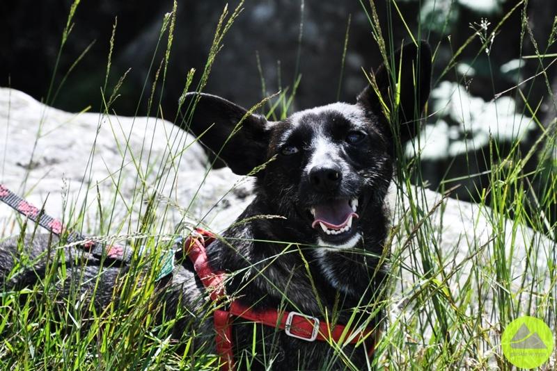 wędrówka z psem po karkonoszach